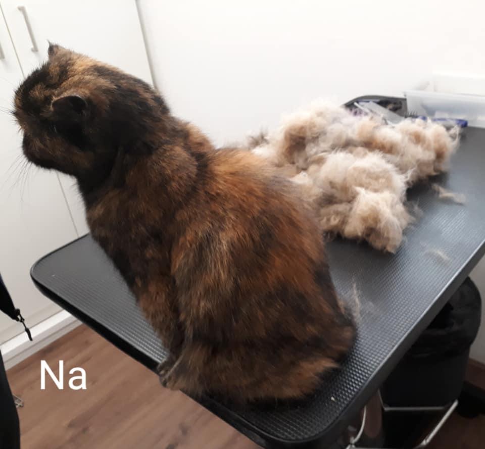 Na het trimmen